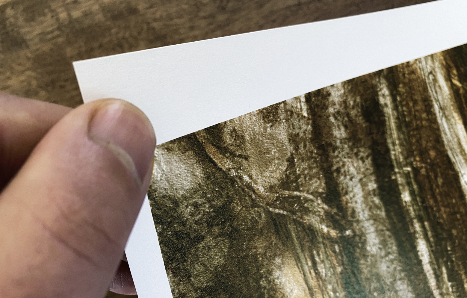 """Inapa Print Stephan Storp, Close-Up """"Schneise"""""""